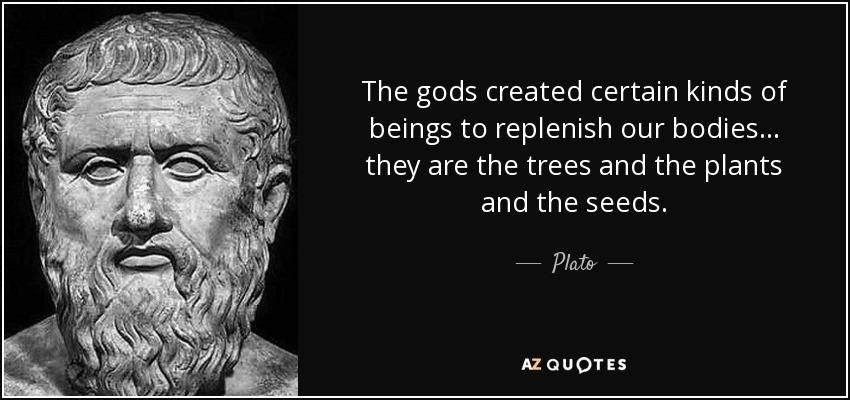quote-the-gods-created-certain-kinds-of-beings-to-replenish-our-bodies-they-are-the-trees-plato-67-3-0347